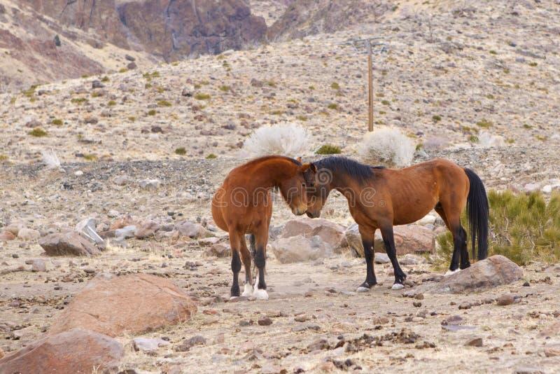 Wilder Mustang stellen weg gegenüber stockbild