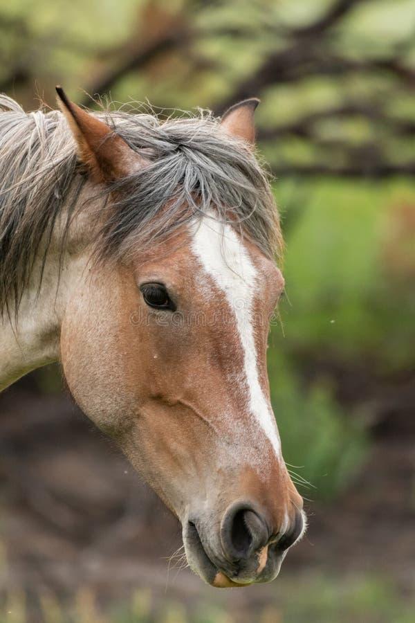 Wilder Pferdekopf stockfotografie
