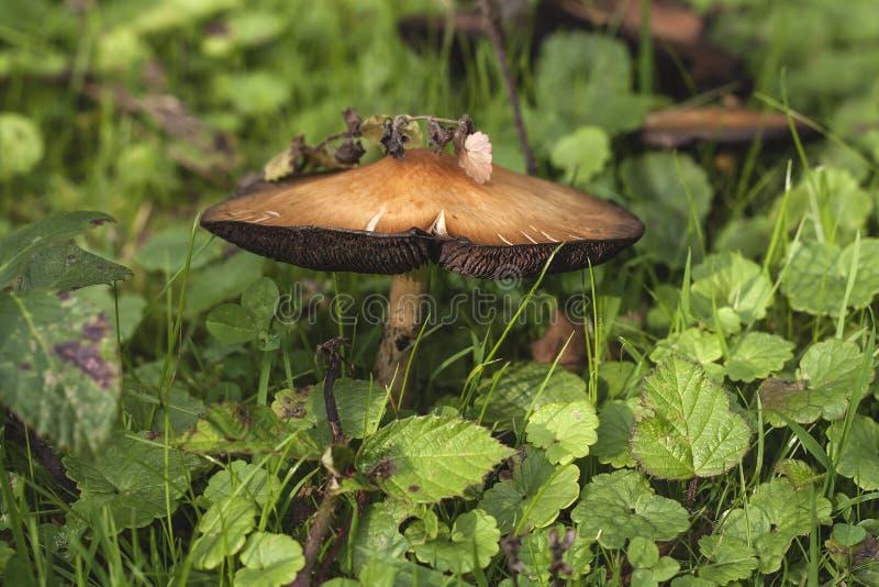 Wilder Pilz, der unter der Vegetation wächst lizenzfreies stockbild