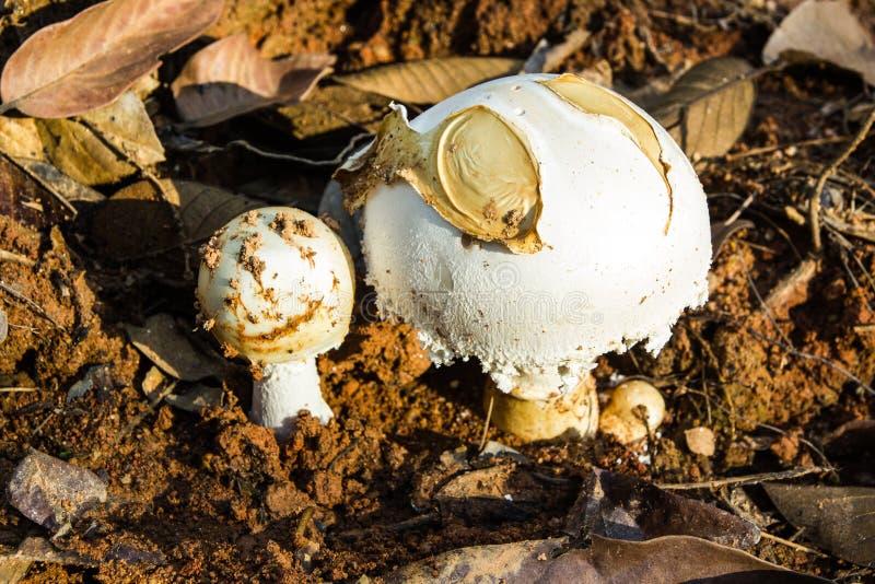 Wilder Pilz, der unter Vegetation wächst lizenzfreies stockbild