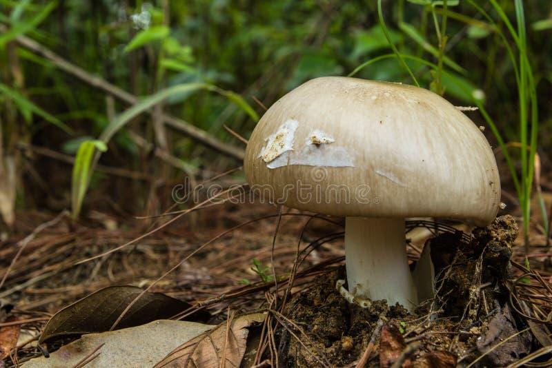 Wilder Pilz, der unter Vegetation wächst lizenzfreie stockbilder