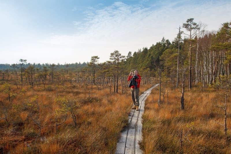Wilder Sumpf im Herbst stockbilder