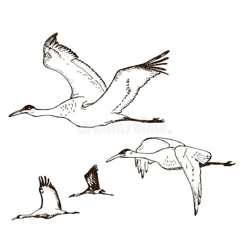 Wilder Vektor der Vögel im Flug Tiere in der Natur oder im Himmel Kr?ne oder Grus und Storch oder Shadoof und Ciconia mit Fl?geln stock abbildung