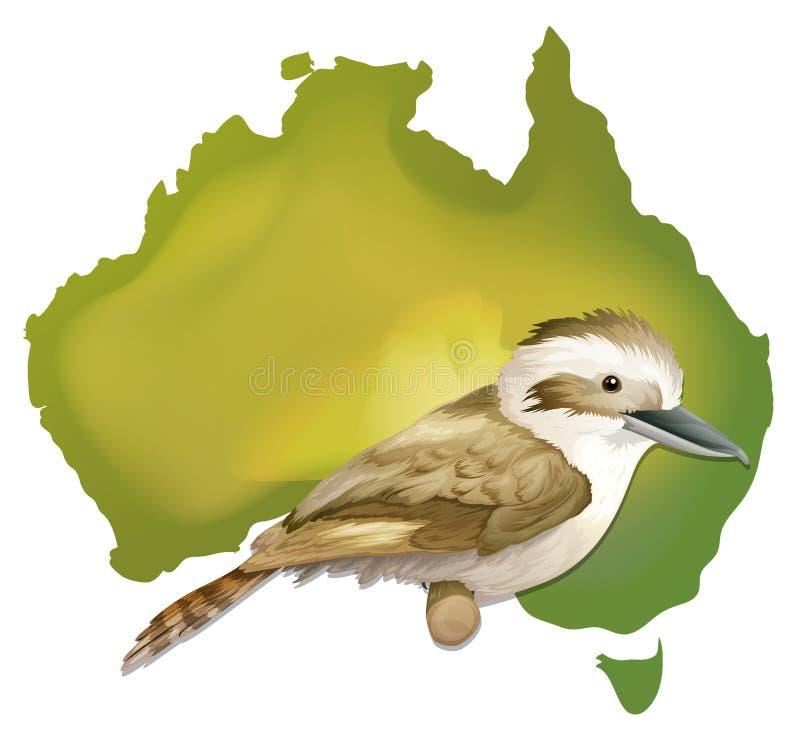 Wilder Vogel in Australien stock abbildung