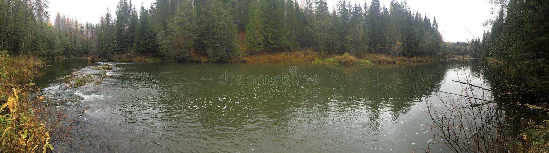 Wilder Wald stockbilder