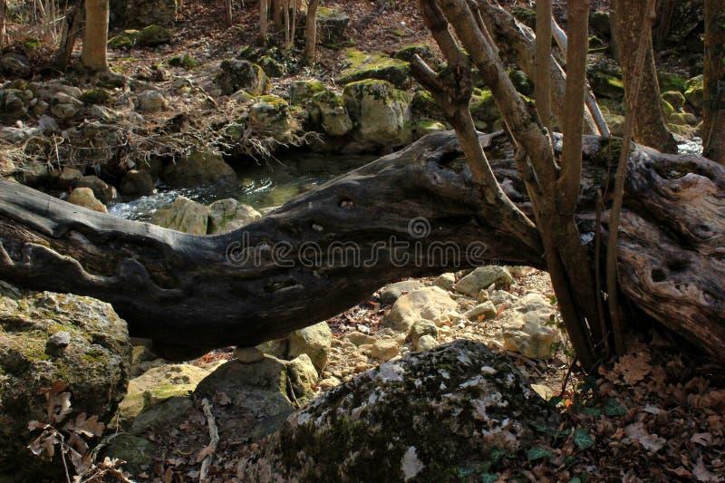 Wilder Wald, Dickichte und Waldsee und -fluß stockfoto