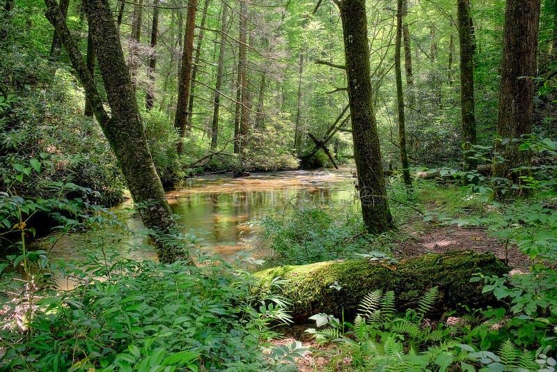 wilderness imagem de stock