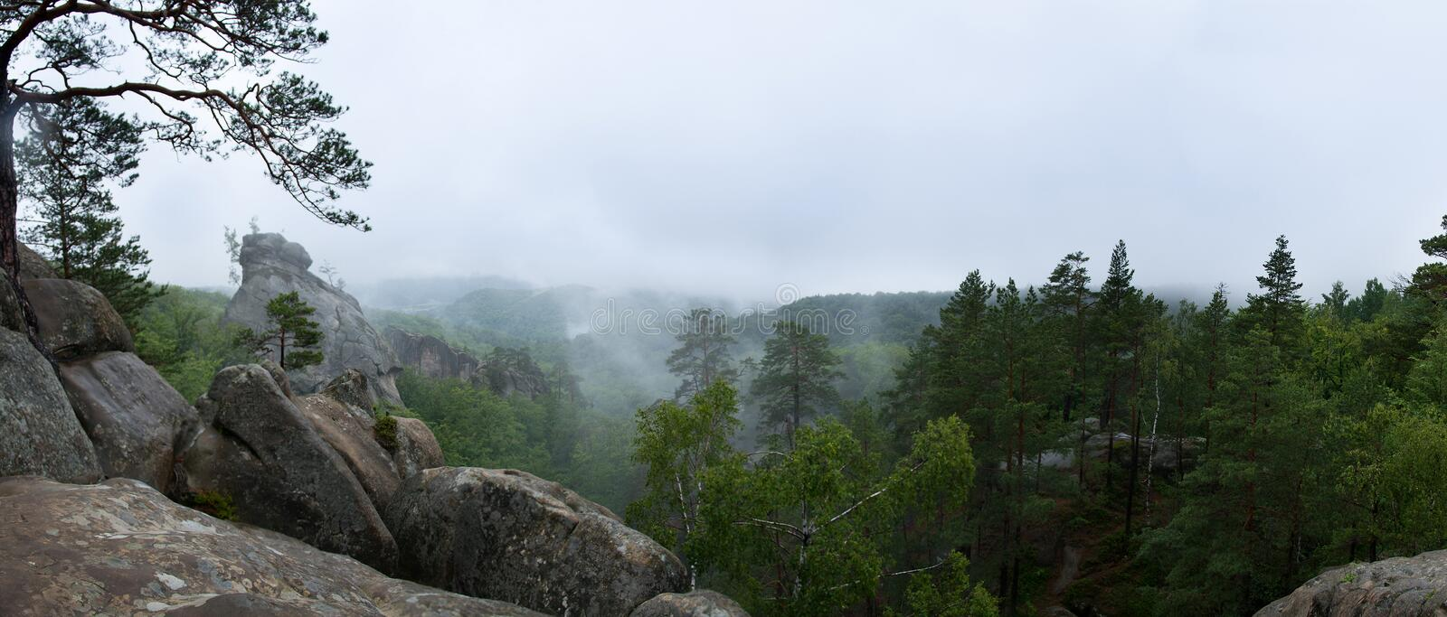 Wilderness forest in fog and rain, panoramic view stock images