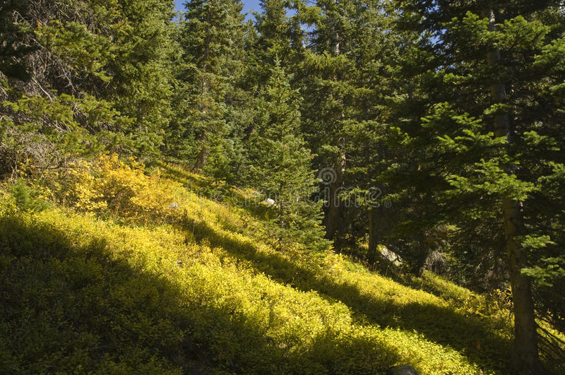 Wilderness Groundcover Royalty Free Stock Photo
