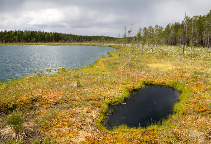 Overgrowing shore of a wilderness lake. An overgrowing shore of a wilderness lake in Finland royalty free stock photo