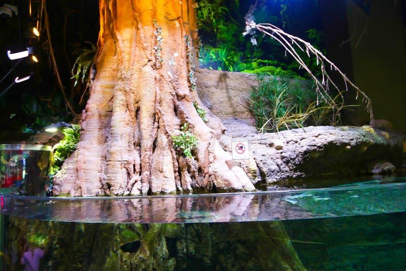 Wildernis - Aquarium Doubai stock foto's