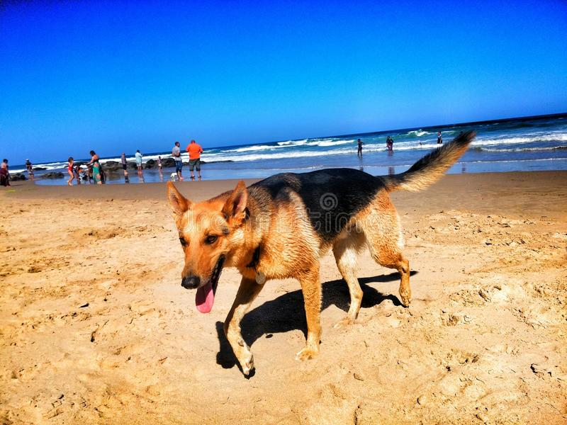 Wildernis beach royalty free stock photo