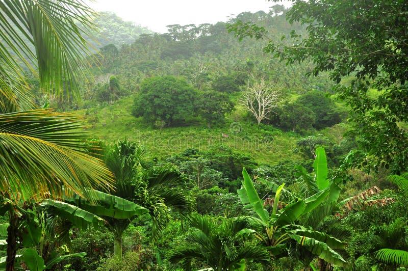 Wildernis bij Dominicaanse Republiek stock fotografie