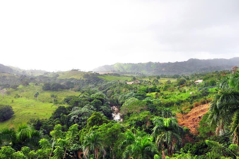Wildernis bij Dominicaanse Republiek royalty-vrije stock afbeelding