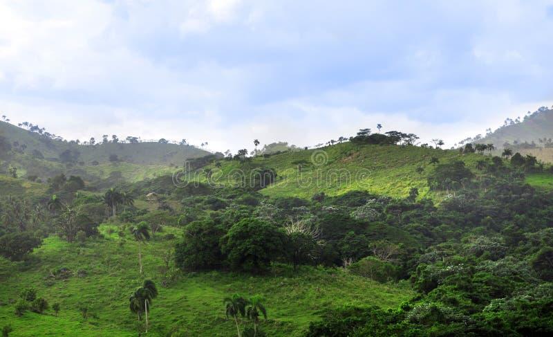 Wildernis bij Dominicaanse Republiek stock foto