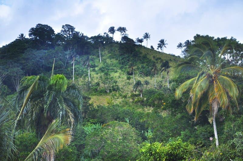 Wildernis bij Dominicaanse Republiek stock afbeelding