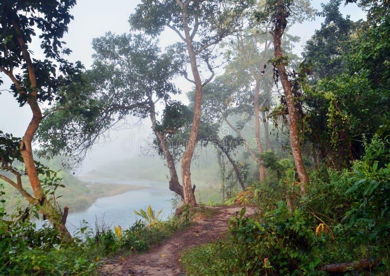 Wildernis in het Koninklijke Nationale Park van Chitwan stock afbeelding