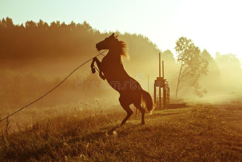 Wildernis het paard royalty-vrije stock afbeelding