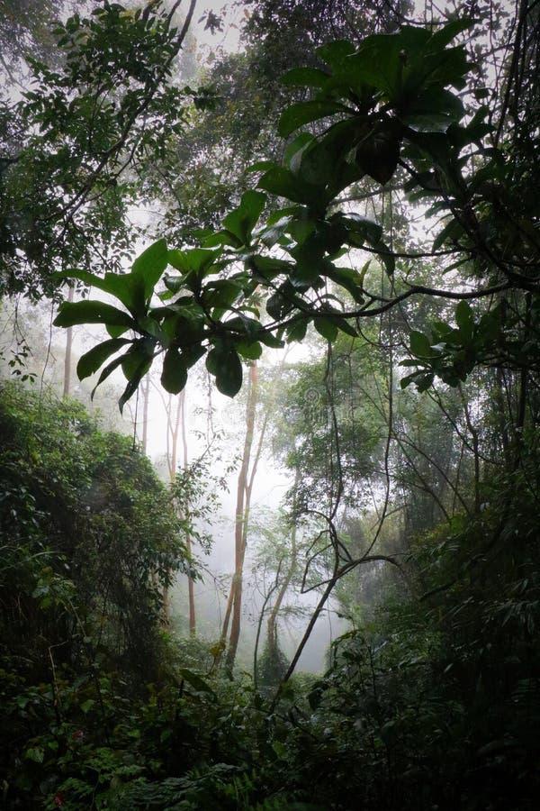 Wildernis in mist stock afbeelding