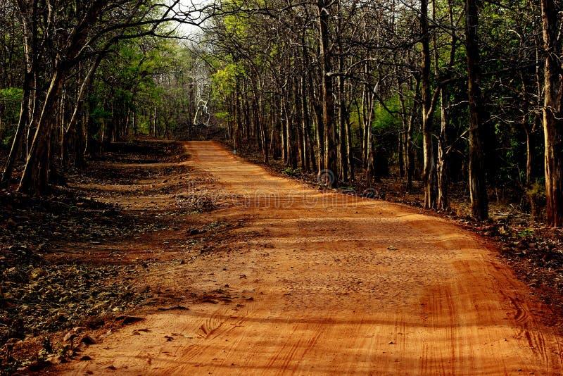 Wildernis Safari Road stock foto's