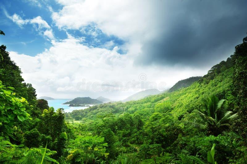 Wildernis van het eiland van Seychellen royalty-vrije stock foto's
