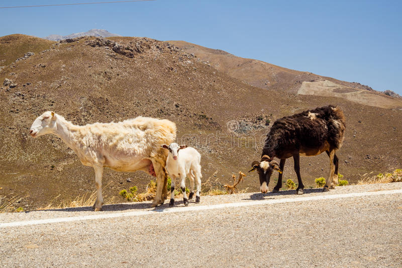Wildernis van Kreta stock fotografie