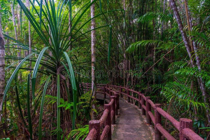 Wildernis wandelingssleep - lokaal oriëntatiepunt in Krabi-Park stock foto