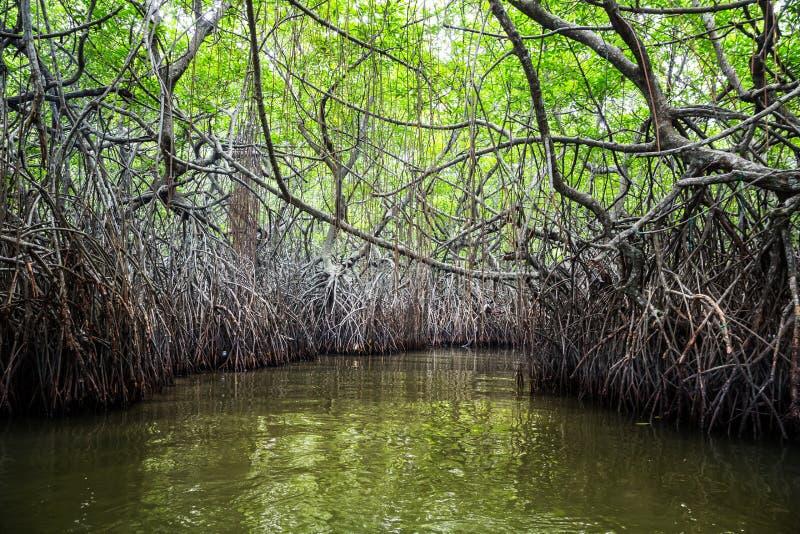 Wildernisrivier en tropische mangroven op Ceylon stock afbeelding