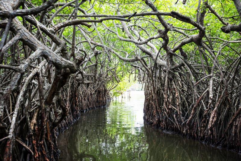 Wildernisrivier en tropische mangroven op Ceylon stock fotografie