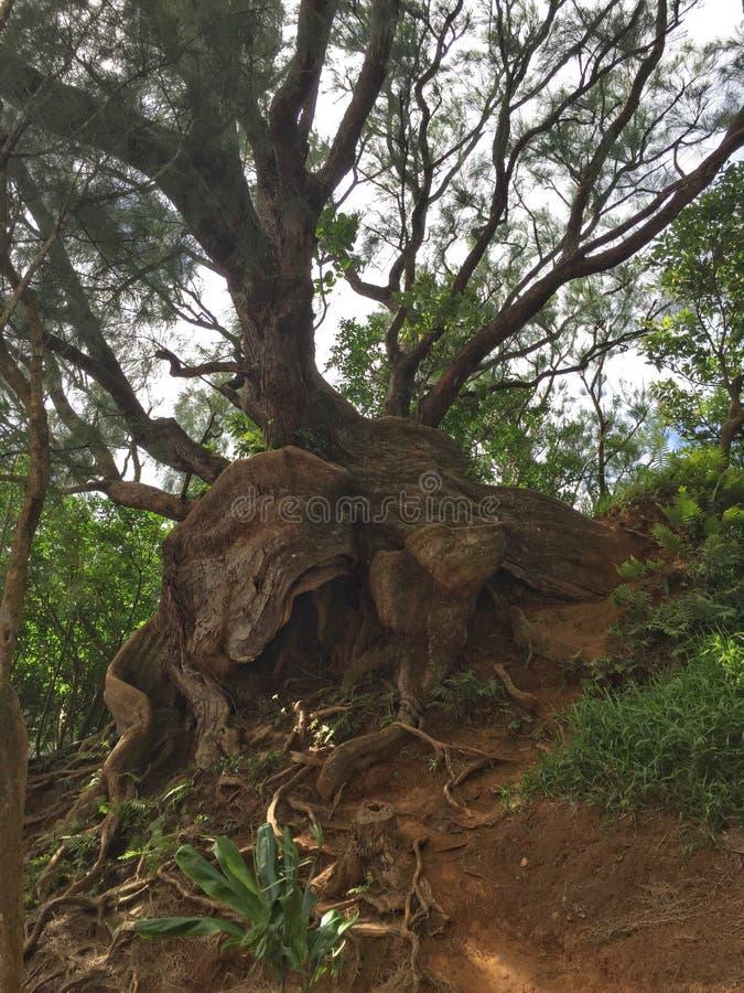 Wildes Baumwachstum stockfotos