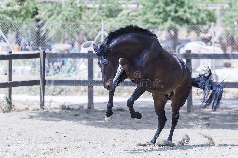 Wildes braunes Pferd stockbilder