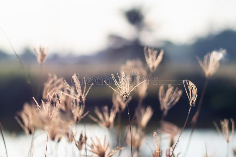 Wildes Feld des Grases auf Sonnenuntergang, weiche Sonnenstrahlen, warmes Tonen, Unschärfenaturhintergrund stockbild