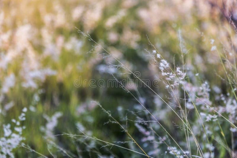Wildes Gras stockfoto