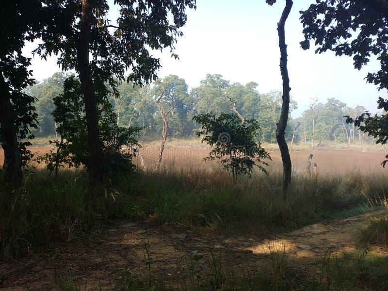 Wildes Innere des Nationalparks des Dschungels chitwan tief kumal tal stockbild