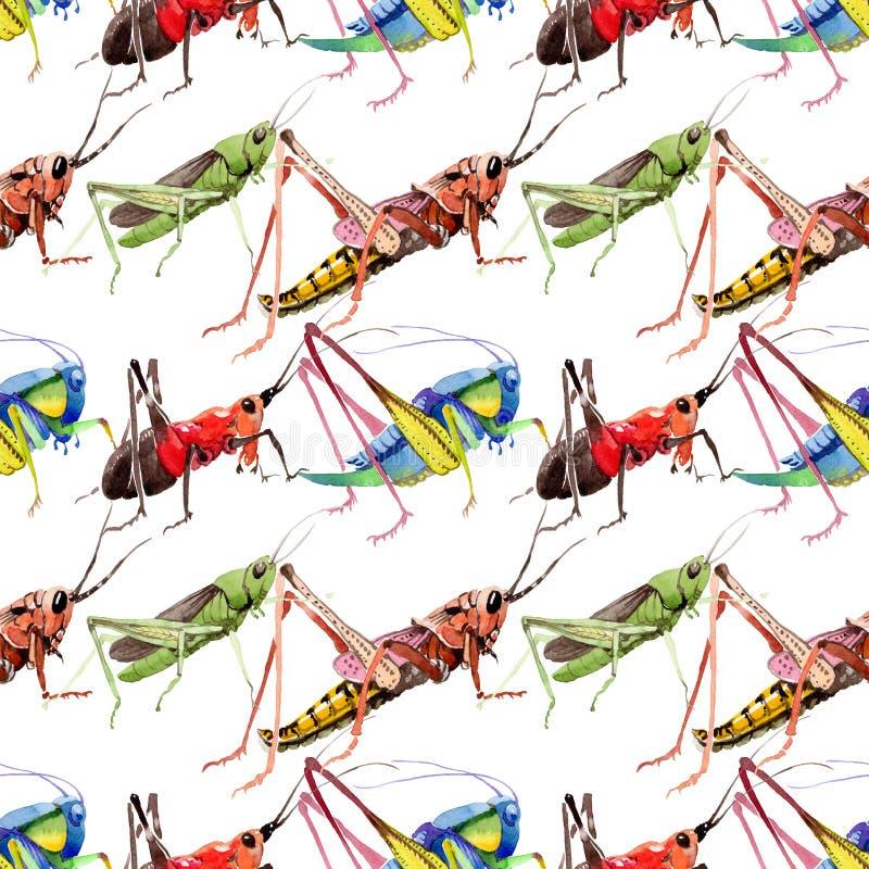 Wildes Insekt der exotischen Grillen in einem Aquarellartmuster vektor abbildung