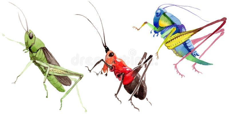 Wildes Insekt der exotischen Grillen in einer Aquarellart lokalisiert lizenzfreie abbildung