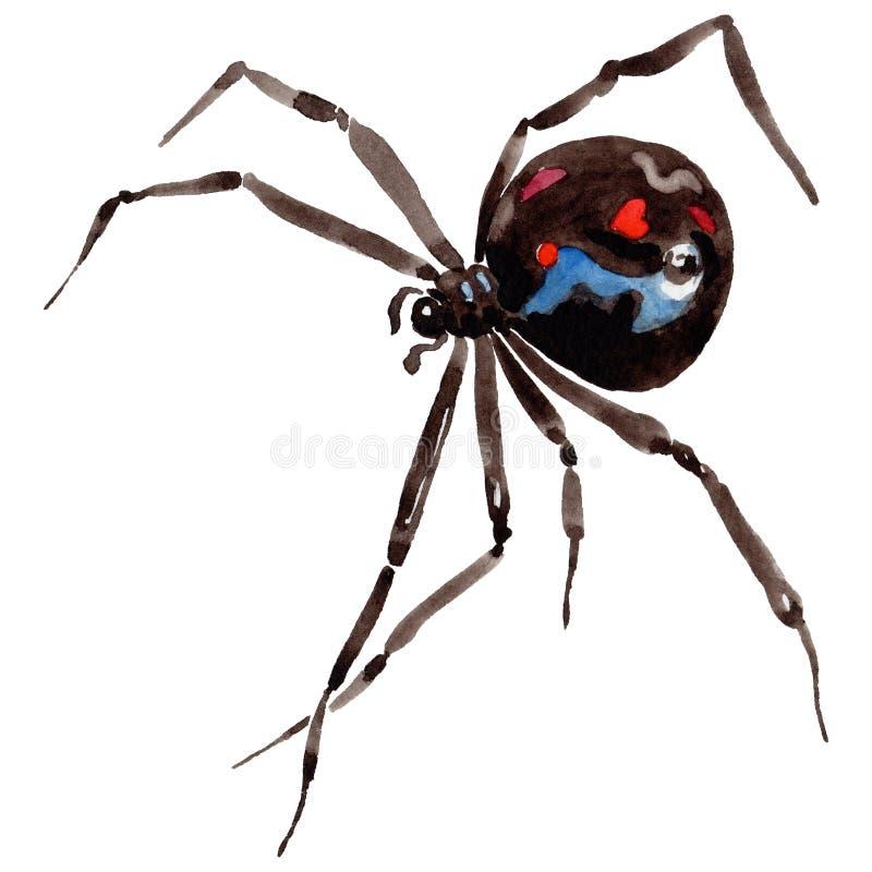 Wildes Insekt der exotischen Spinne in einer Aquarellart lokalisiert stock abbildung