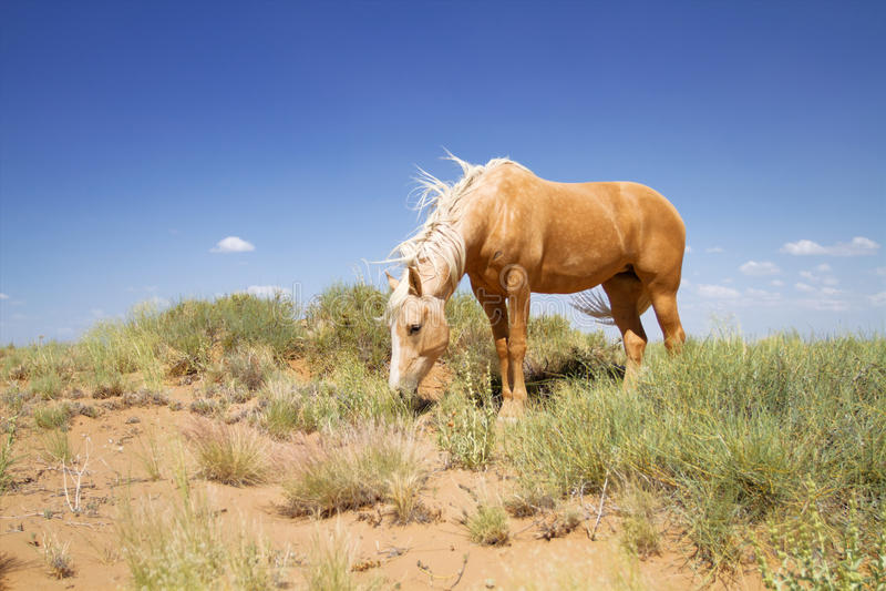 Wildes Mustangpferd lizenzfreie stockfotografie