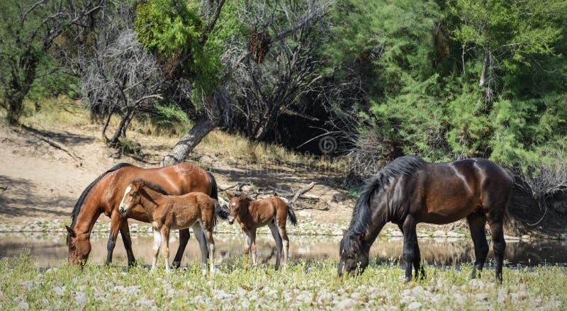Wildes Pferd lizenzfreies stockfoto