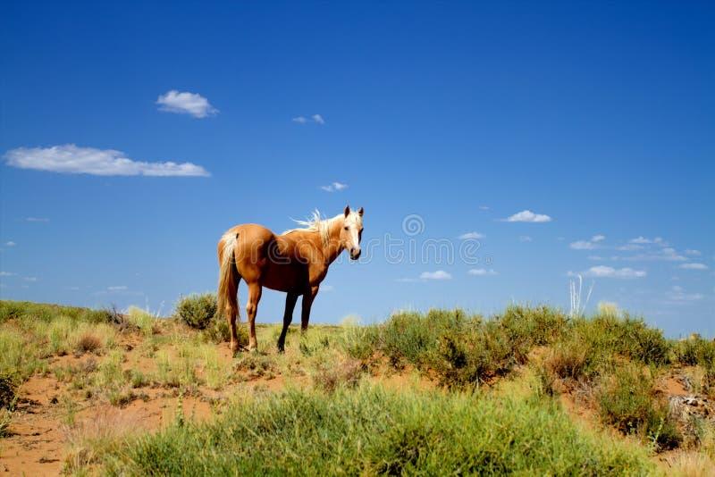 Wildes Pferd in der Natur stockfotografie