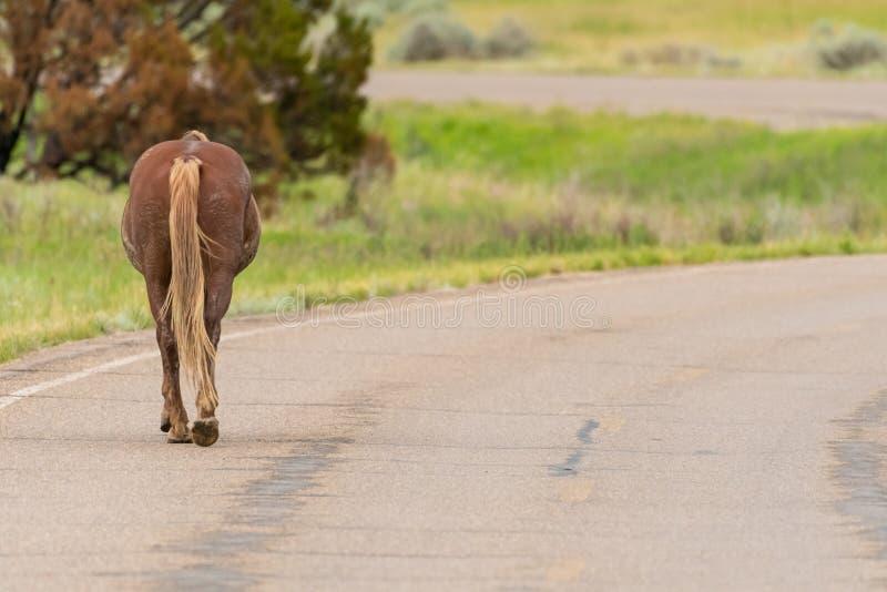 Wildes Pferd wandert hinunter gepflasterte Straße stockbild