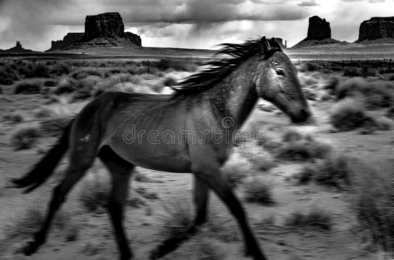 Wildes Pferdebetrieb stockfotos