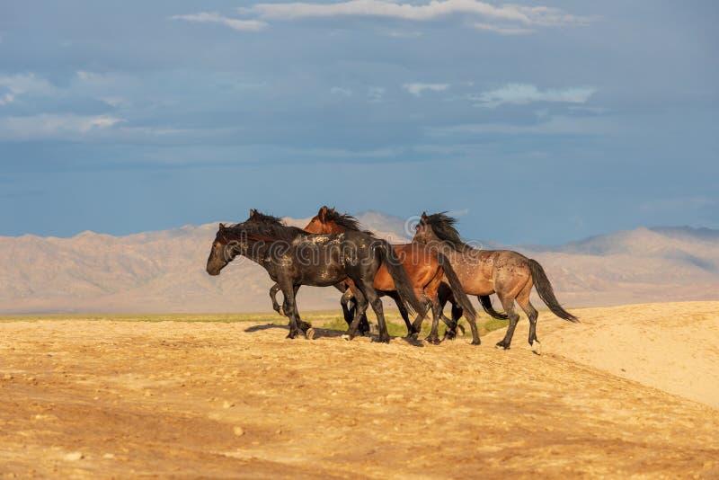 Wildes Pferdeherde in der Utah-Wüste lizenzfreie stockbilder
