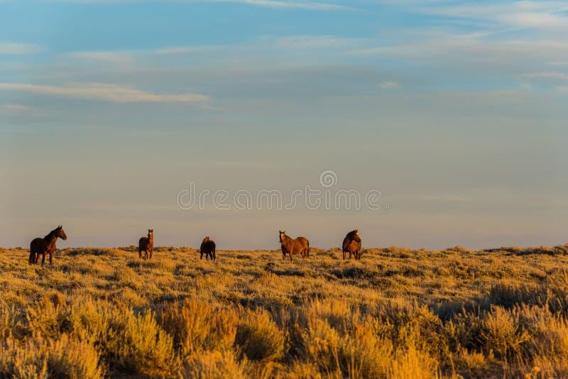 Wildes Pferdeszenische Schleife, Wyoming lizenzfreie stockbilder