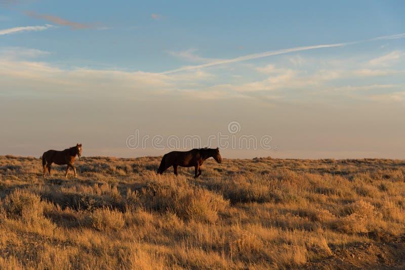 Wildes Pferdeszenische Schleife, Wyoming stockfotos