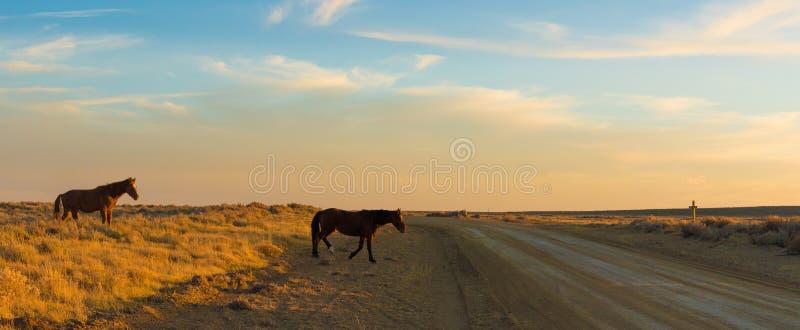Wildes Pferdeszenische Schleife, Wyoming lizenzfreie stockfotografie