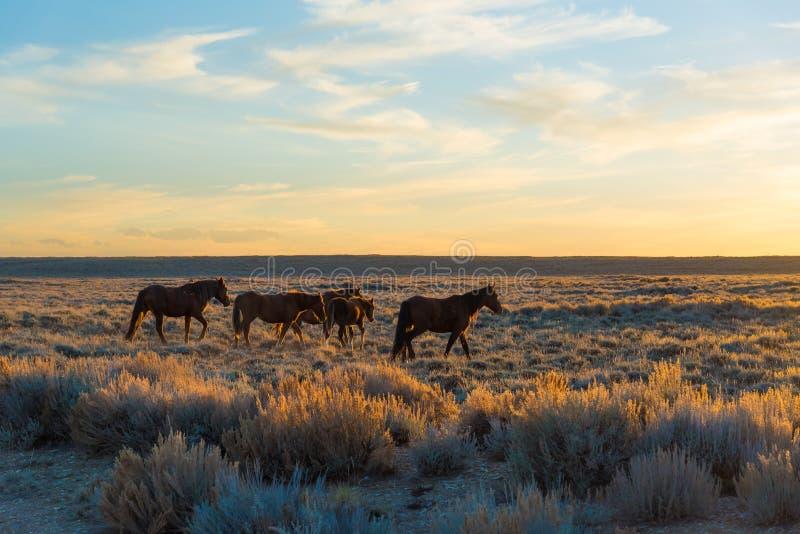 Wildes Pferdeszenische Schleife, Wyoming lizenzfreie stockfotos
