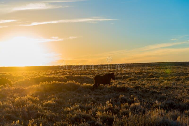 Wildes Pferdeszenische Schleife, Wyoming lizenzfreies stockfoto