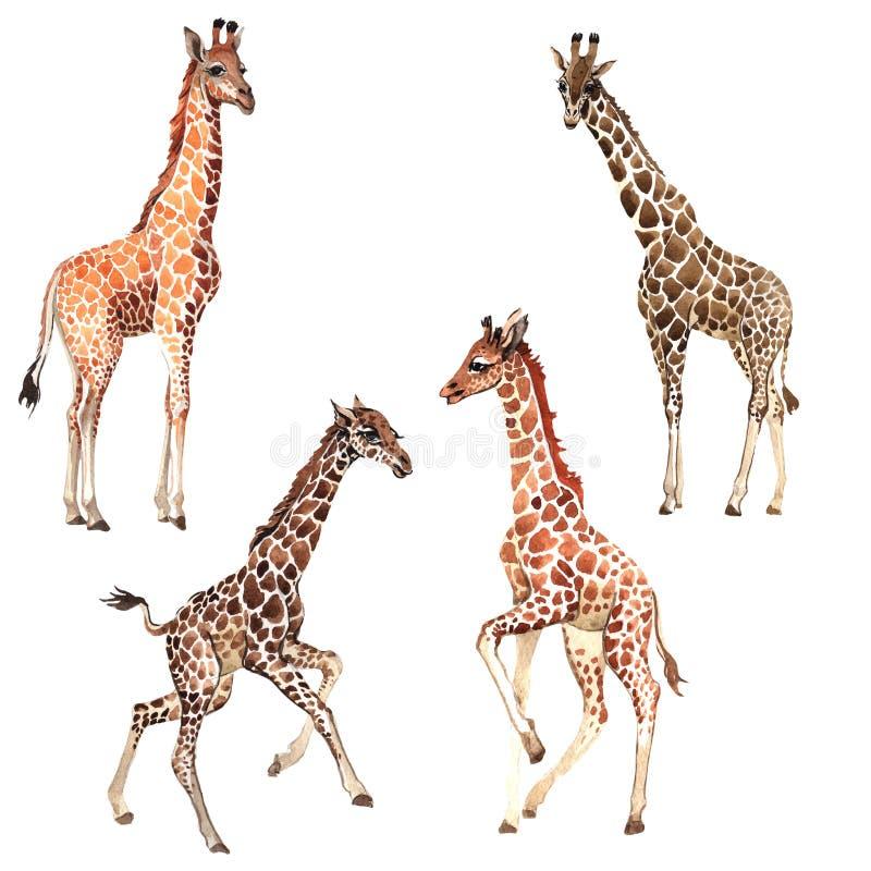 Wildes Tier der exotischen Giraffe in einer Aquarellart lokalisiert vektor abbildung