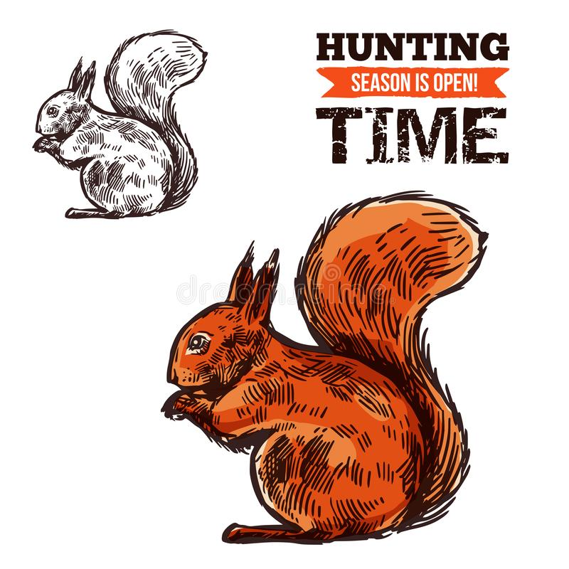 Wildes Tier des Eichhörnchens, Vektorskizze vektor abbildung